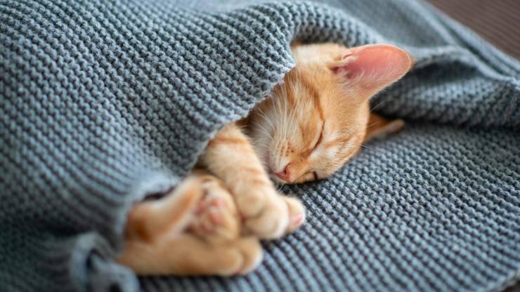 proteggere gatto freddo inverno