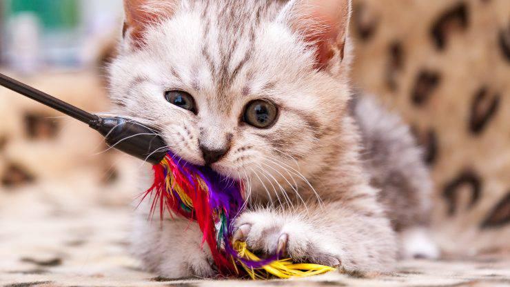 giochi per gattini e cuccioli di gatto