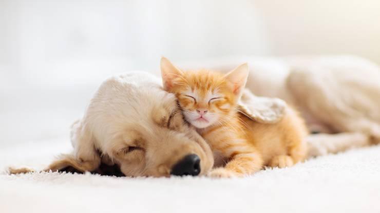 cane e gatto: le ordinanze per animali domestici nel dpcm