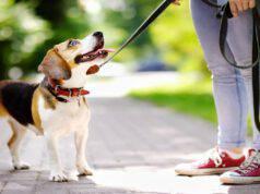 Affidare il cane può integrare reato di abbandono di animali