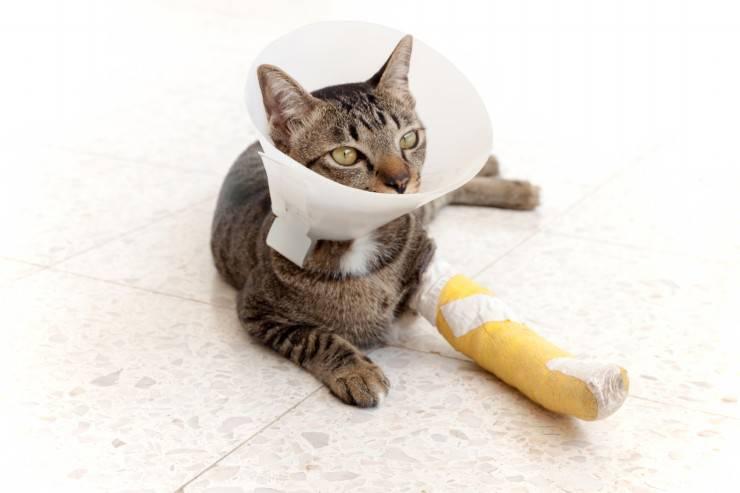 Il gatto si lecca le ferite