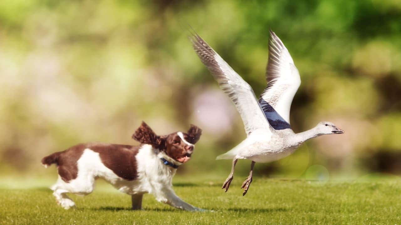 Perché il cane attacca gli uccelli? (Foto Adobe Stock)