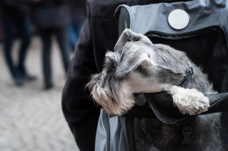 zainetto porta cane