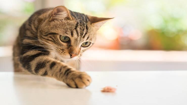 Malattie del gatto dovute all'alimentazione