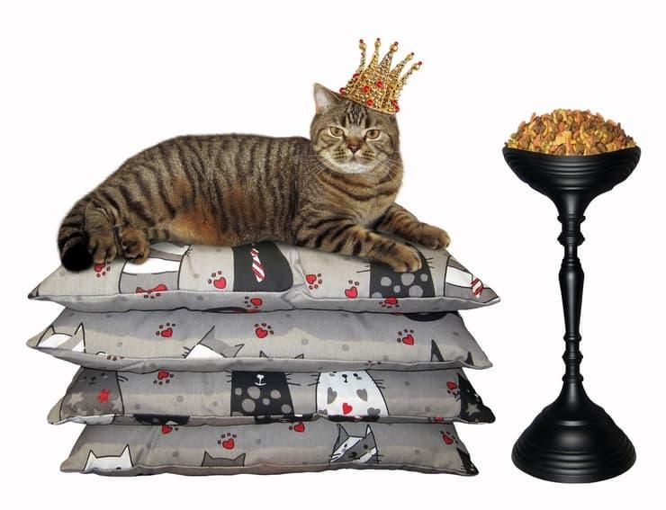 Gatto viziato (Foto Adobe Stock)