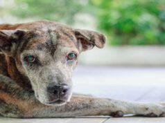 Razze di cani che si ammalano più facilmente