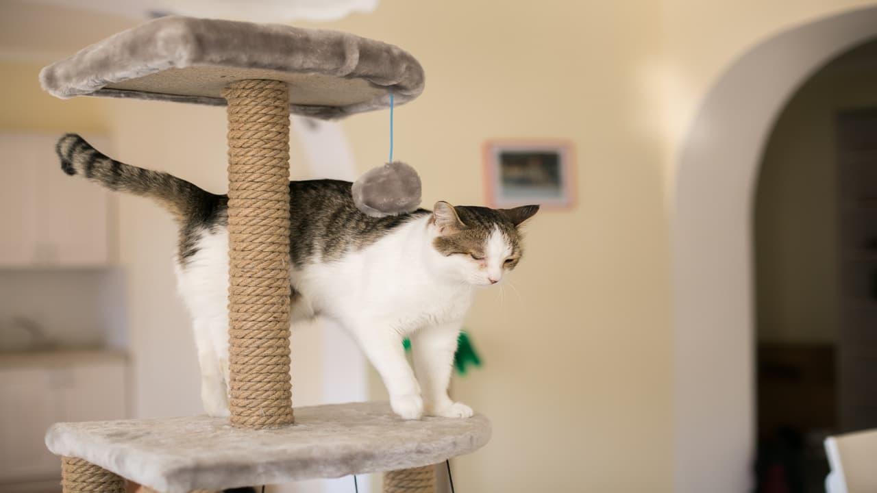 Come arredare una stanza a misura di gatto (Foto Adobe Stock)