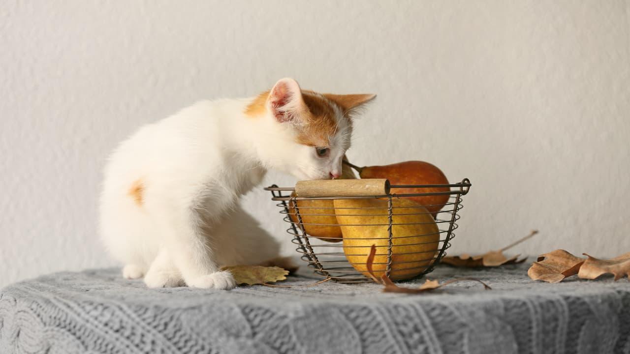 Il gatto può mangiare la pera? (Foto Adobe Stock)