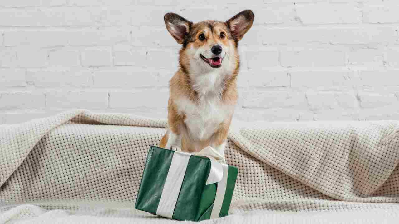 Perché il cane porta animali morti in regalo