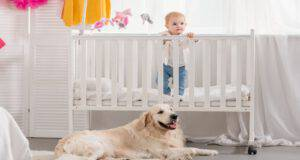 I cani proteggono i bambini