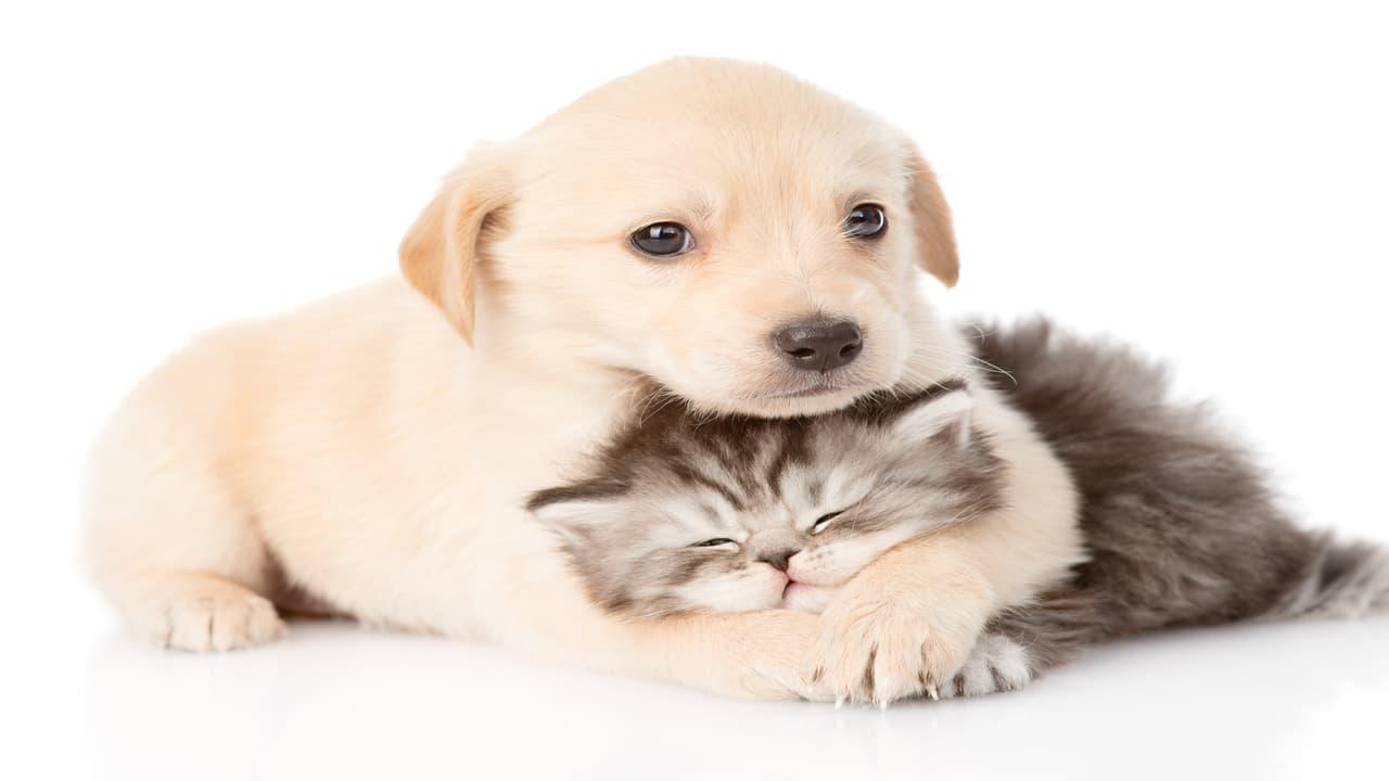 Legge sulla protezione degli animali da compagnia (Foto Adobe Stock)