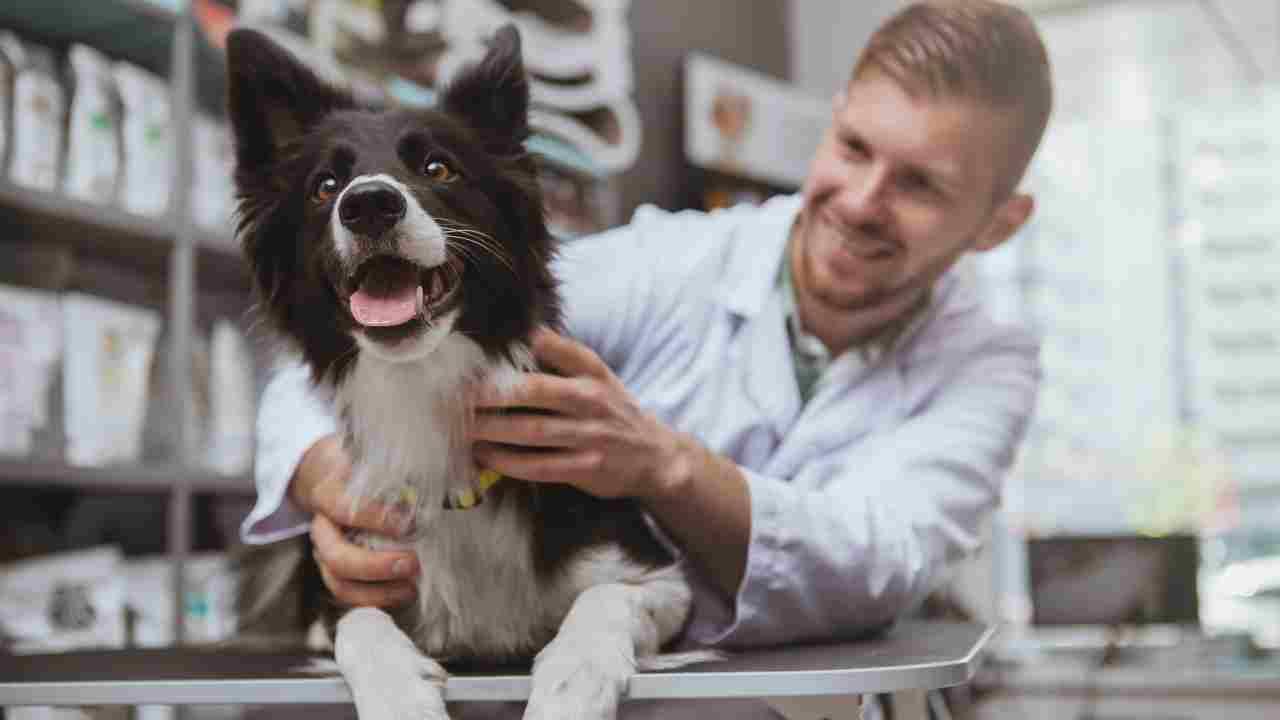 Steatosi epatica nel cane