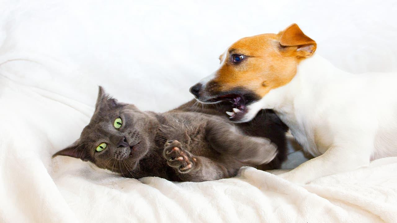 Cane morde gatto (Foto Adobe Stock)