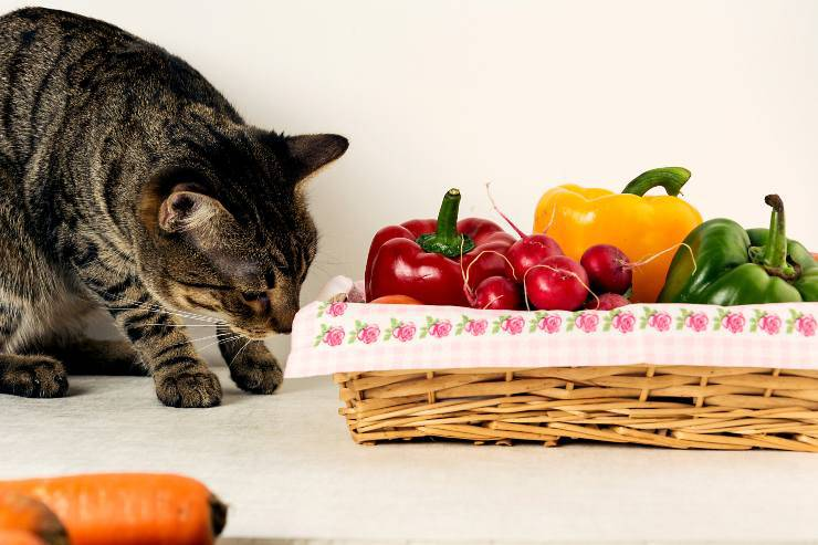 verdure al gatto