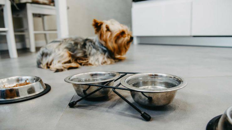Il cane non mangia e non beve