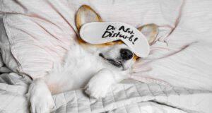 Cane viziato: come comportarsi e quali sono gli errori da evitare (Foto Adobe Stock)