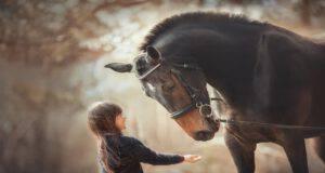 Empatia del cavallo (Foto Adobe Stock)