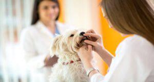 Cane morde veterinario: il proprietario è responsabile? (Foto Adobe Stock)