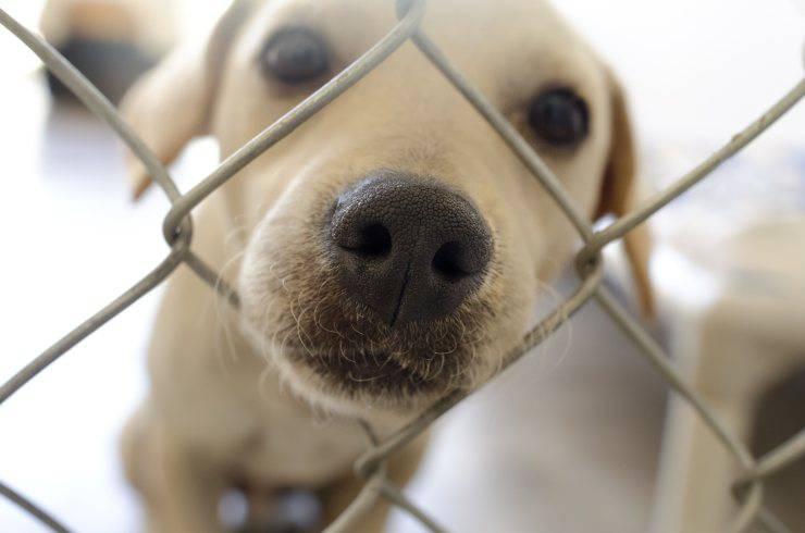 Il cane ha il naso infiammato