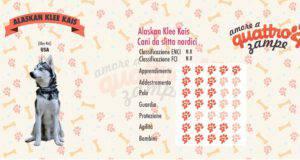 Alaskan Klee Kais scheda razza