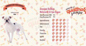 American Bulldogs scheda razza