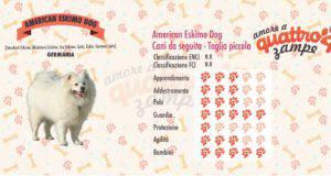 American Eskimo Dog scheda razza