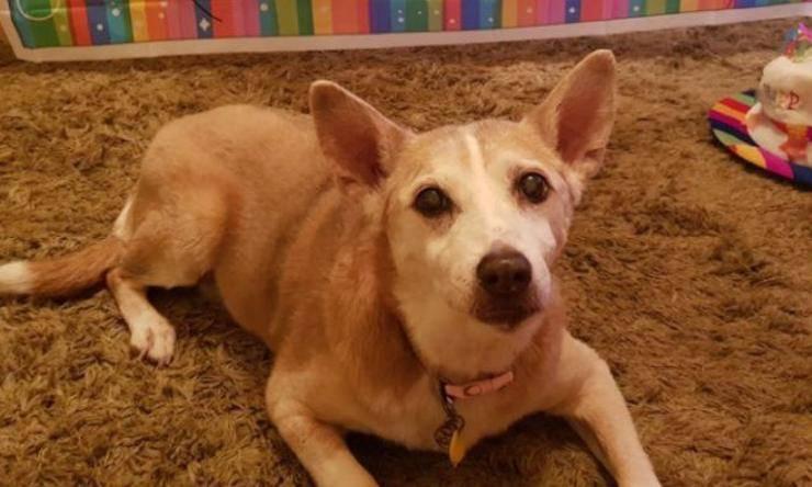 cane fragile regno unito 16 anni