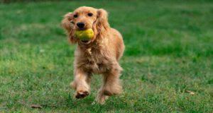 Il cane può mangiare cachi? (Foto Adobe Stock)