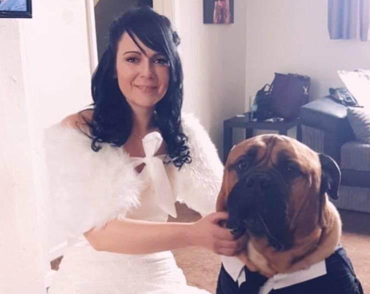 cane sta per morire, padroni anticipano matrimonio