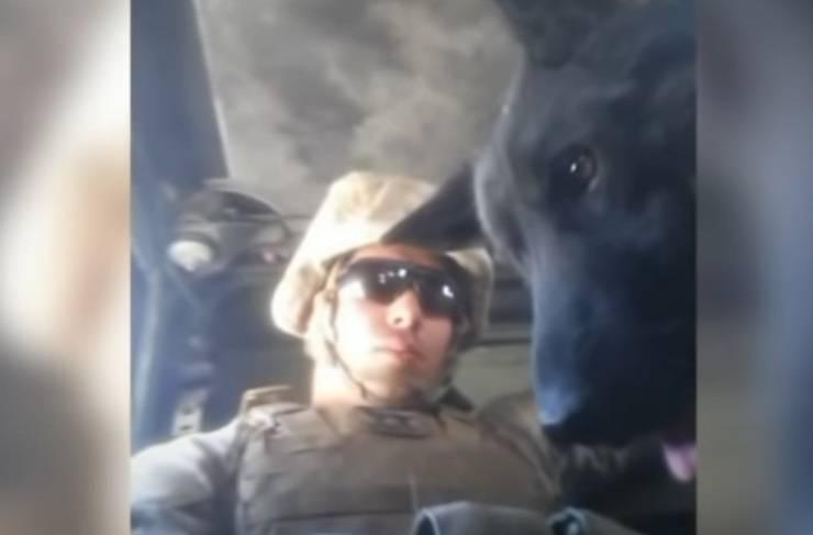 cane sergente separati si ritrovano