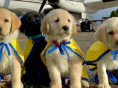 cani guida tre piloti