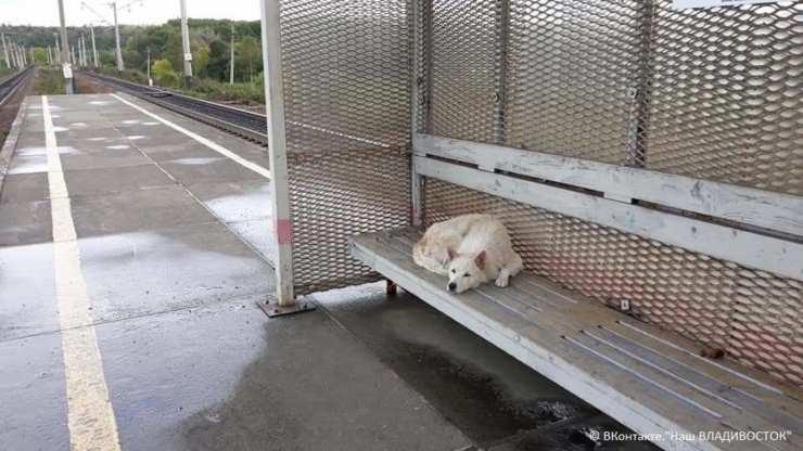 cane abbandonato stazione