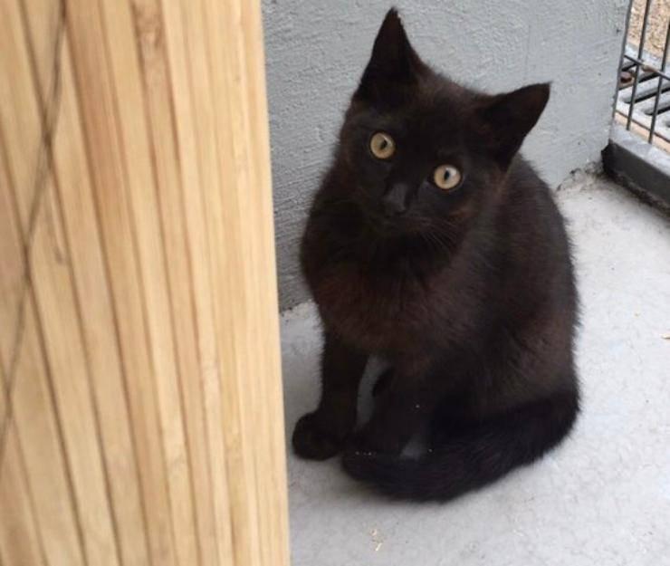 gatto ritrovato otto anni