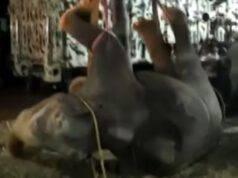 elefante caduto pozzo india