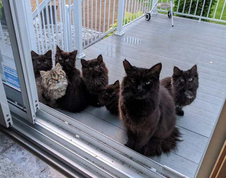 mamma gatta presenta micetti
