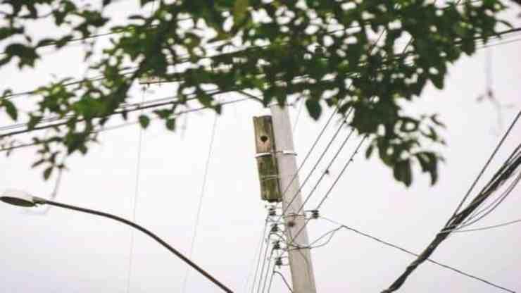 Un uomo salva una famiglia di tucani che vive in un palo del telefono (foto Facebook)