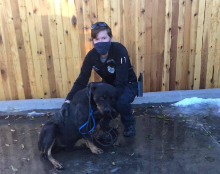 Rottweiler cane salvato con gelato