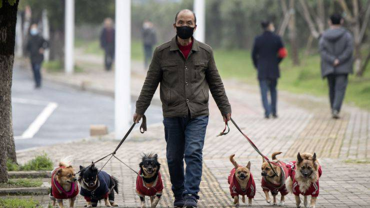 vietato passeggiare cani