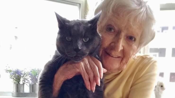 gatto raven signora