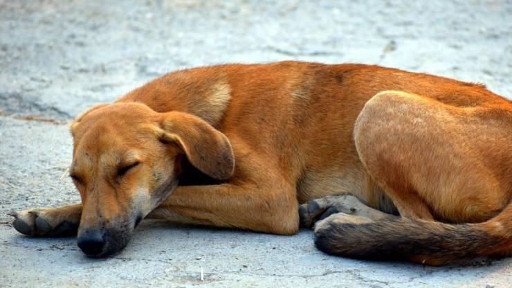 cane gettato macchina proprietaria