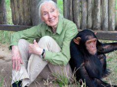 jane goodall scimmia