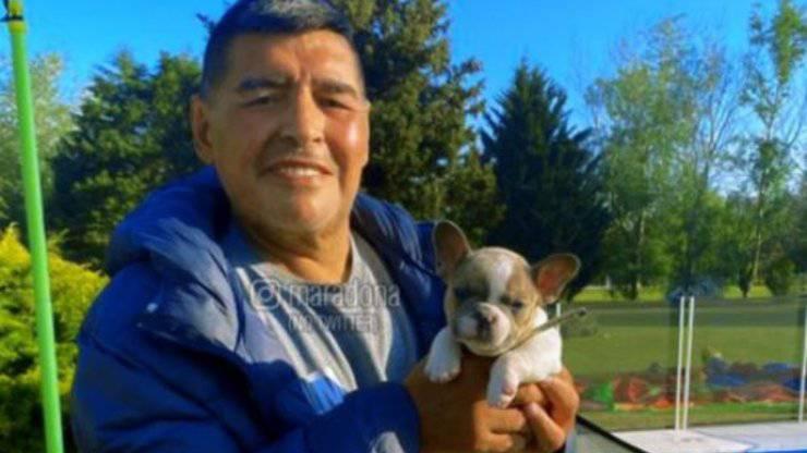 Maradona Animali Cane