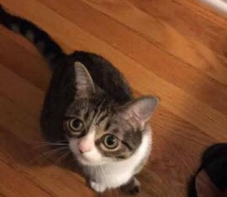 gatto abbandonato trova famiglia e amico