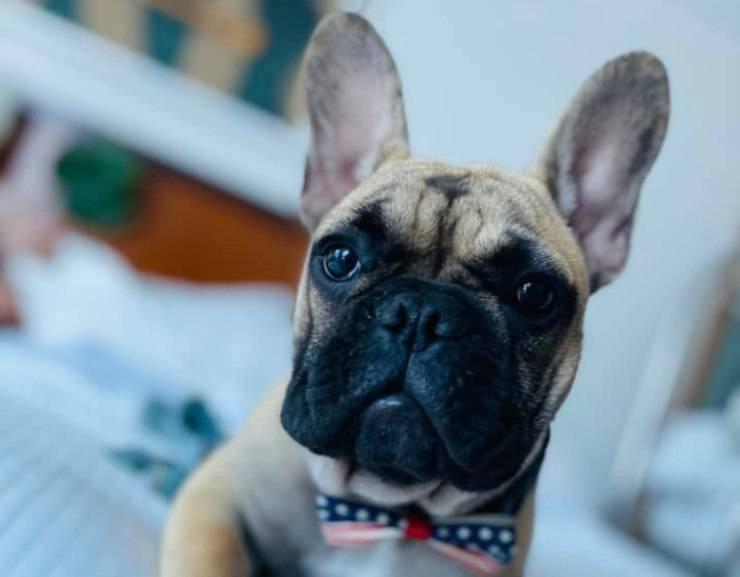 cane eletto sindaco