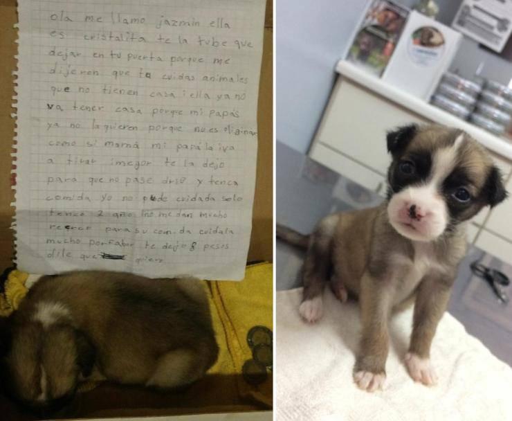 bambina abbandona cane costretta genitori