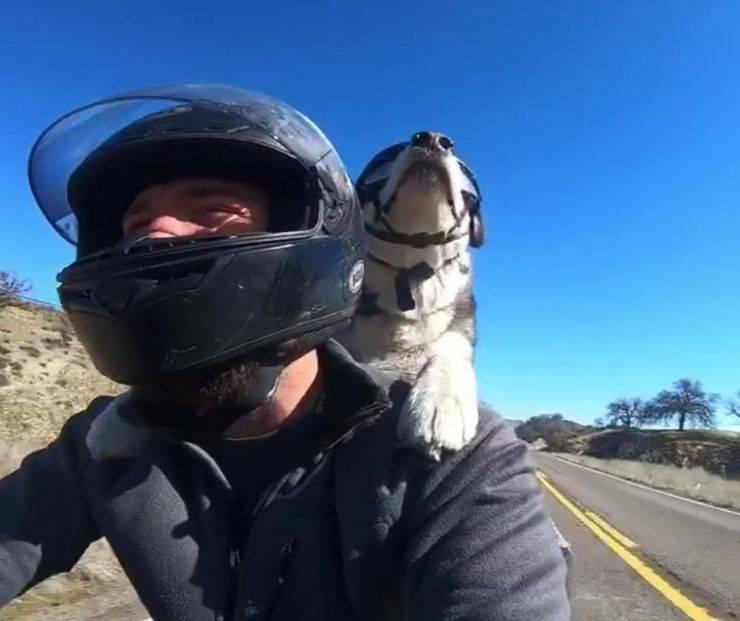 cane motociclista