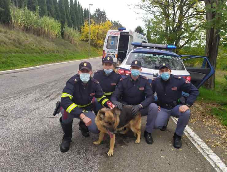 polizia salva cagnolina strada