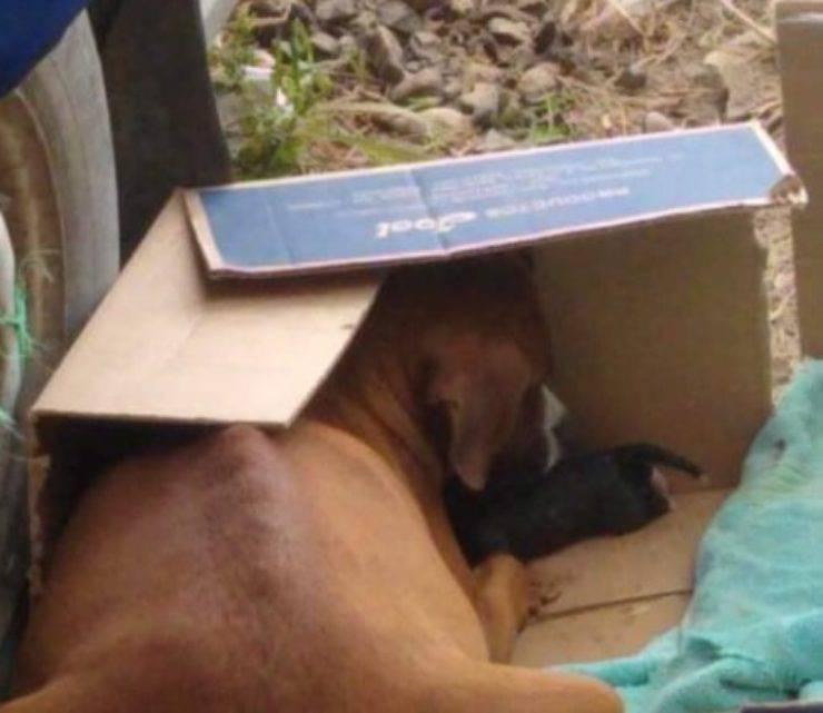 cane mamma cuccioli abbandonati poveri