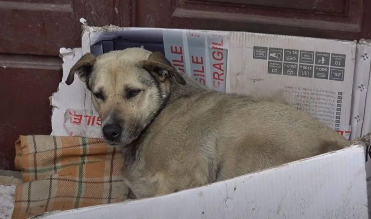 cagnolina sei anni strada salvata turista