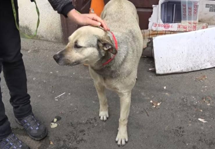 cagnolina salvata turista sei anni strada